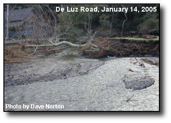 Creek Flow