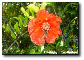 Persistent Pollinator