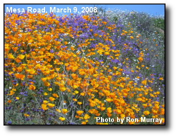 Road Wildflowers