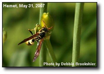 Spring Pollinator