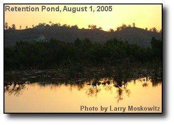 Pond at Dawn