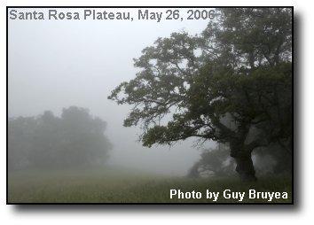 Misty Oaks