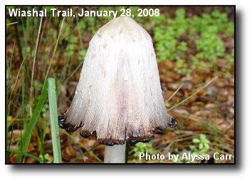 Monster Mushroom