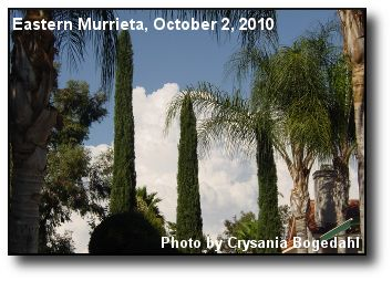 Through Palms and Cypress