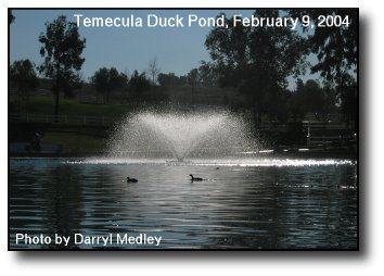 Winter at the Duck Pond